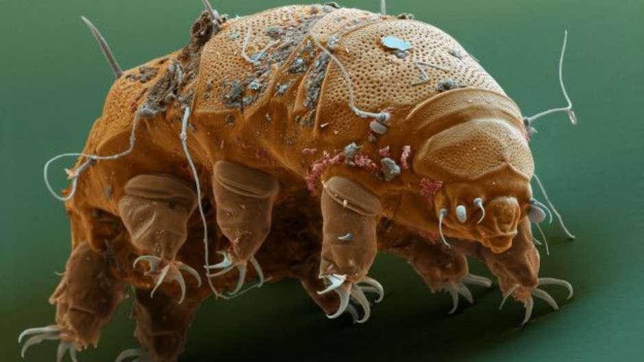 Microbios-Eles-Habitam-em-Voce Micróbios: Você não os Vê, Mas Eles Habitam em Você